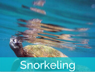 Honokeana Cove activities - snorkeling