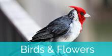 Honokeana Cove birds and flowers slideshow