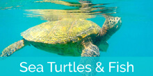 Honokeana Cove turtles and fish slideshow