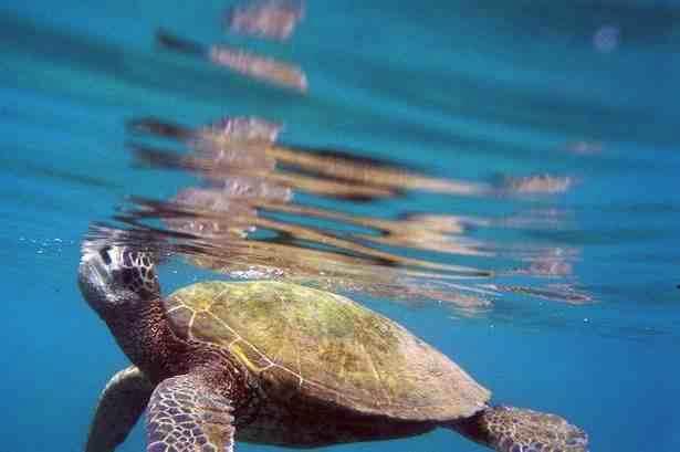 Honokeana Cove Activities - Snorkeling
